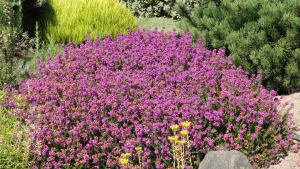 drought-tolerant in Islamabad